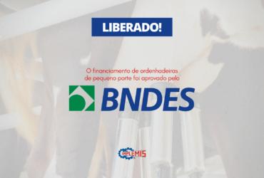 BNDES liberou financiamento para pequenas ordenhadeiras